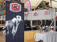 Sydney Royal 2011 stall 1