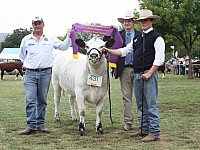 Grand Champion Speckle Park Female